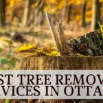 The 5 Best Tree Removal Services in Ottawa