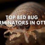 Top 5 Bed Bug Exterminators in Ottawa